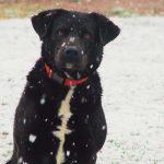 Cooper Enjoying the Snow in Little Rock!- Photo by Casie Vann